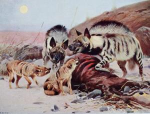 26 hyenas jackals